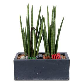 공기정화식물 스투키
